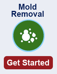mold remediation in Minnesota TN